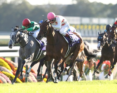 Mikki Queen, successful in the Yunshun Himba (Jpn-I, Japanese Oaks) earlier this year, added a second classic success to her record when taking the Shuka Sho (Jpn-I) in stakes record time at Kyoto. Winning by a neck from Rings Queen, Mikki Queen covered about 2,000 meters (about 1 1/4 miles) in 1:56.09 on firm turf, lowering by 0.1 seconds the stakes standard set last year by Shonan Pandora. The Shuka Sho is the final jewel in the Japan's Triple Crown for fillies.