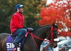 Private Zone at Keeneland for the 2015 Breeders' Cup