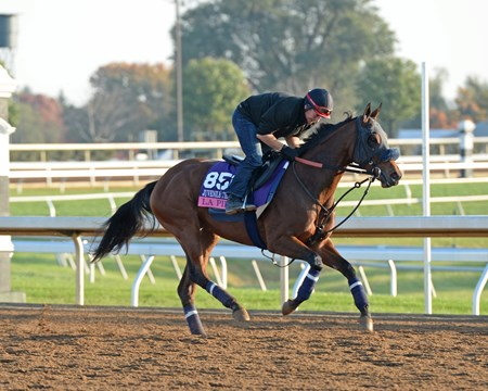 Caption: La Piba Morning scenes at Keeneland for Breeders' Cup on Oct. 23, 2015.
