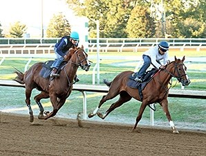 Judy the Beauty, outside, works with Kitten's Top Cat, inside, works at Keeneland Oct. 19