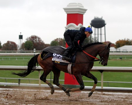 Red Vine (Breeders' Cup Dirt Mile) on the track at Keeneland on October 28, 2015. Photo By: Chad B. Harmon