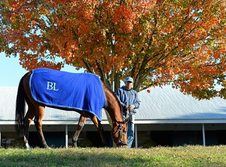 Grand Arch grazing at his Keeneland barn. Morning scenes at Keeneland for Breeders' Cup on Oct. 21, 2015.