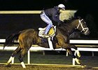 Dame Dorothy worked four furlongs in :49, galloped out five furlongs in 1:01 2/5 and six furlongs in 1:14 1/5.