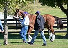 Beholder arrives at Keeneland for the Breeders' Cup.