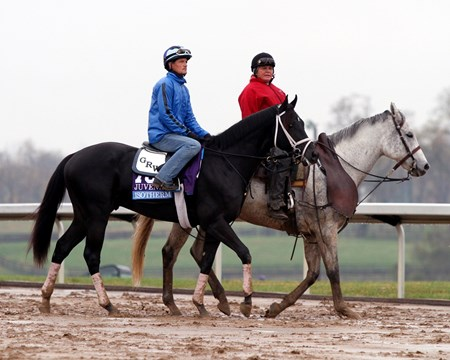 Isotherm (Breeders' Cup Juvenile) on the track at Keeneland on October 27, 2015. Photo By: Chad B. Harmon