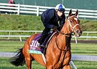 "The Pizza Man<br><a target=""blank"" href=""http://photos.bloodhorse.com/BreedersCup/2015-Breeders-Cup/Works/i-SCH5C9R"">Order This Photo</a>"