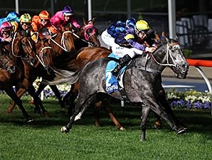 Chautauqua comes home strong to win the Manikato Stakes.