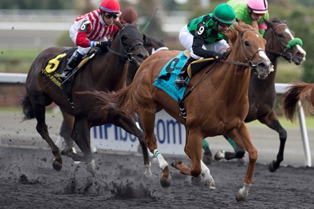 Jockey Huber Villa-Gomez guides Cactus Kris to victory in the $150,000 Ontario Fashion Stakes at Woodbine Racetrack.