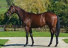 Oasis Dream Colt Leads Day 1 Trade at Arqana