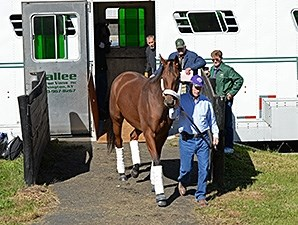 Beholder arrives at Keeneland Oct. 19 for the Breeders' Cup.