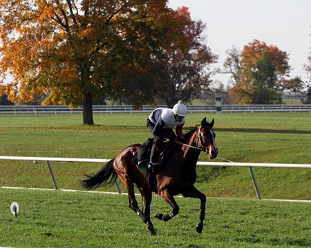 Karakontie (Breeders' Cup Mile) on the turf course at Keeneland on October 29, 2015. Photo By: Chad B. Harmon
