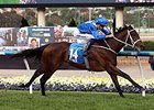 Filly Winx Smashes Course Record in Cox Plate