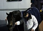 Multiple group I winner Golden Horn arrived at Keeneland Oct. 24