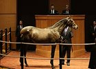 Tapit Colt Stars at Fasig-Tipton October