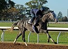 Liam's Map to Breeders' Cup Dirt Mile