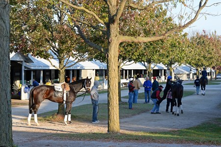 Caption: Todd Pletcher barn scene, as riders get legs up for the next set. 