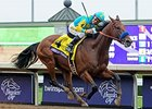 "Triple Crown and Breeders' Cup Classic winner American Pharoah <br><a target=""blank"" href=""http://photos.bloodhorse.com/BreedersCup/2015-Breeders-Cup/Breeders-Cup-Classic/i-znCSLnf"">Order This Photo</a>"