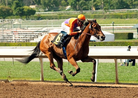 #6 BEHOLDER (Gary Stevens) $75,000 Santa Lucia Stakes Owner: Spendthrift Farm, LLC Trainer: Richard Mandella April 10, 2015 Santa Anita Park Arcadia CA © BENOIT PHOTO