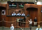 A 2-year-old son of Gio Ponti brought $250,000 Oct. 14 to top the horses of racing age section of the Ocala Breeders' Sales Company's 2015 Fall Mixed Sale.