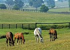 Horse Country Inc. provides tours of Central Kentucky farms