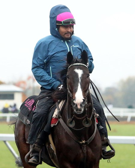 Lava Man - Morning Training - Keeneland Race Course - 102715