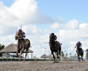 Flora Dora overpowers the rest of the field in the Florida Sire My Dear Girl Stakes at Gulfstream Park.