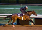Super Majesty Sharp in Keeneland Work