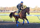 American Pharoah galloped 2 1/2 times around the five-furlong Keeneland training track.