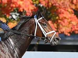 Osaila - Keeneland, October 20, 2015.