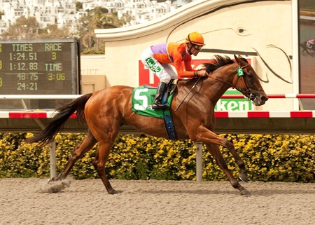 Beholder and Gary Stevens win the $100,000 Torrey Pines Stakes Sunday, September 1, 2013 at Del Mar Thoroughbred Club.