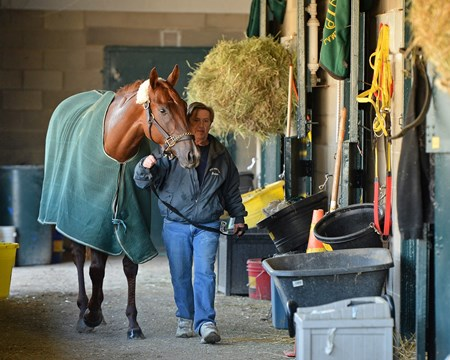 Lady Shipman walking the shedrow. Morning scenes at Keeneland for Breeders' Cup on Oct. 21, 2015.