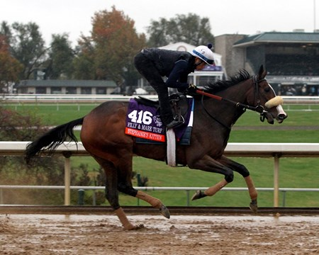 Stephanie's Kitten (Breeders' Cup Filly Mare Turf) on the track at Keeneland on October 28, 2015. Photo By: Chad B. Harmon