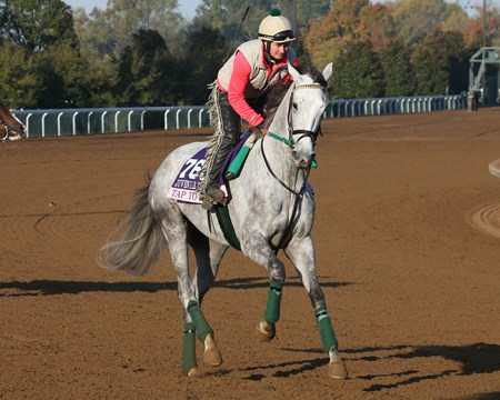 Tap to It - Morning Training - Keeneland Race Course - KEE - 102315