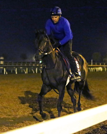 Conquest Daddyo - Morning Training - Keeneland Race Course - 102415