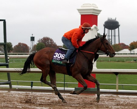 Ordak Dan (Breeders' Cup Turf) on the track at Keeneland on October 28, 2015. Photo By: Chad B. Harmon