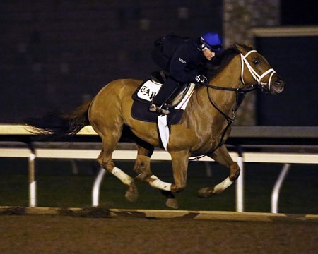 Red Rifle - Morning Workout - Keeneland Race Course - 102315