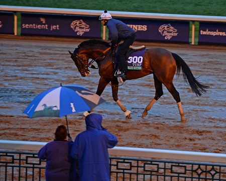 Caption: Big Blue Kitten on rainy morning at Keeneland.