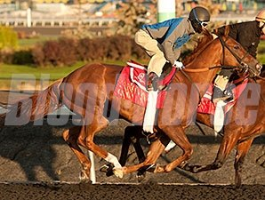 Kaigun - Woodbine, October 14, 2015.