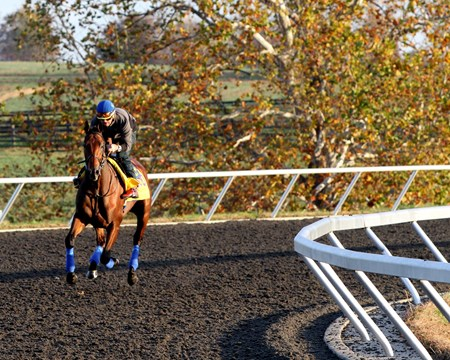American Pharoah (Breeders' Cup Classic) on the training track at Keeneland on October 29, 2015. Photo By: Chad B. Harmon