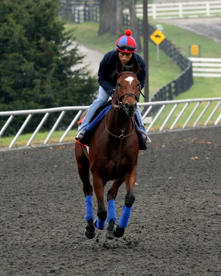 Photo Call (Breeders' Cup Filly & Mare Turf) on the training track at Keeneland on October 27, 2015. Photo By: Chad B. Harmon