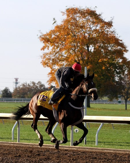 Effinex (Breeders' Cup Classic) on the track at Keeneland on October 29, 2015. Photo By: Chad B. Harmon