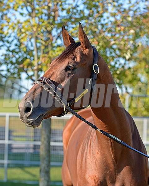 Beholder. Morning scenes at Keeneland for Breeders' Cup on Oct. 21, 2015.