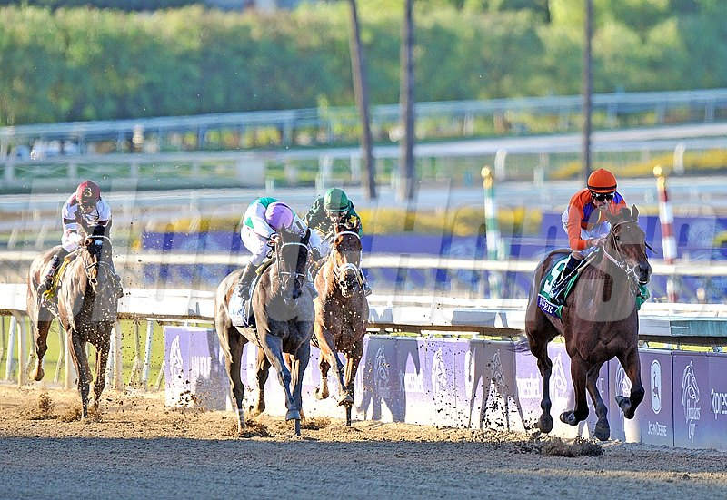 Beholder wins the Breeders' Cup Distaff (gr. 1) Jockey: Gary Stevens Santa Anita Park, Arcadia, CA Purse: $2,000,000 Date: November 1, 2013 Class: Grade I TV: NBC Sports Network Age: 3YO&UP Race: 10 Distance: 1 1/8 miles Post Time: 4:35 PM PT Photo by: Rick Samuels