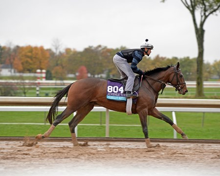 Caption: Camelot Kitten