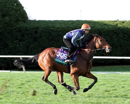 Ordak Dan (Breeders' Cup Turf) on the turf course at Keeneland on October 29, 2015. Photo By: Chad B. Harmon