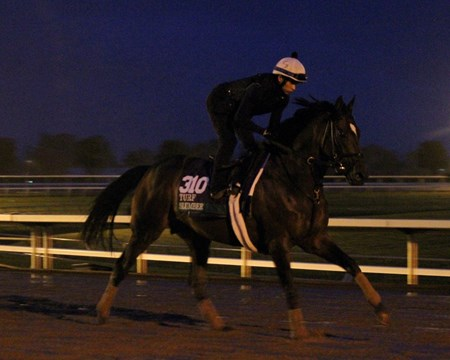 Slumber (Breeders' Cup Turf) on the track at Keeneland on October 28, 2015. Photo By: Chad B. Harmon