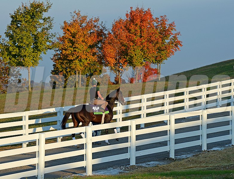 Caption:Tourist goes to the track