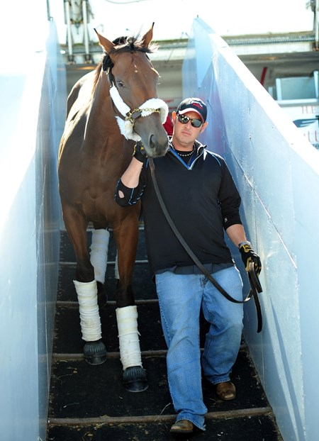 Beholder being led off Tex Sutton flight 725 at Bluegrass Field in Lexington, KY Oct. 19 for the Breeders' Cup.