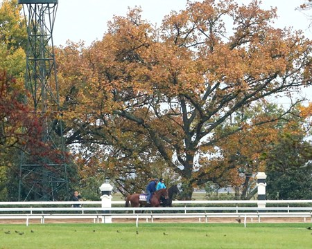 Judy the Beauty - Morning Workout - Keeneland Race Course - 102415
