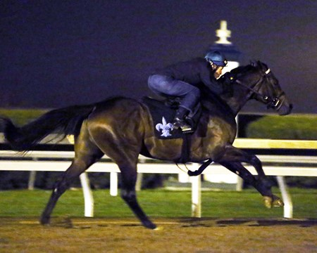 Exaggerator - Morning Workout - Keeneland Race Course - 102415